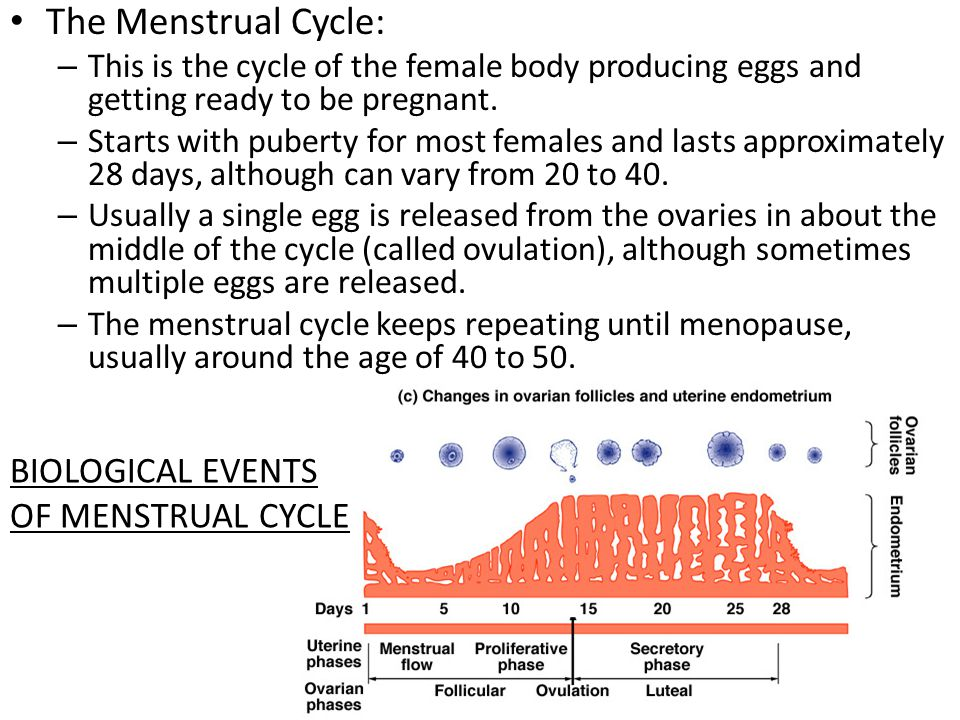 The Menstrual Cycle: BIOLOGICAL EVENTS OF MENSTRUAL CYCLE