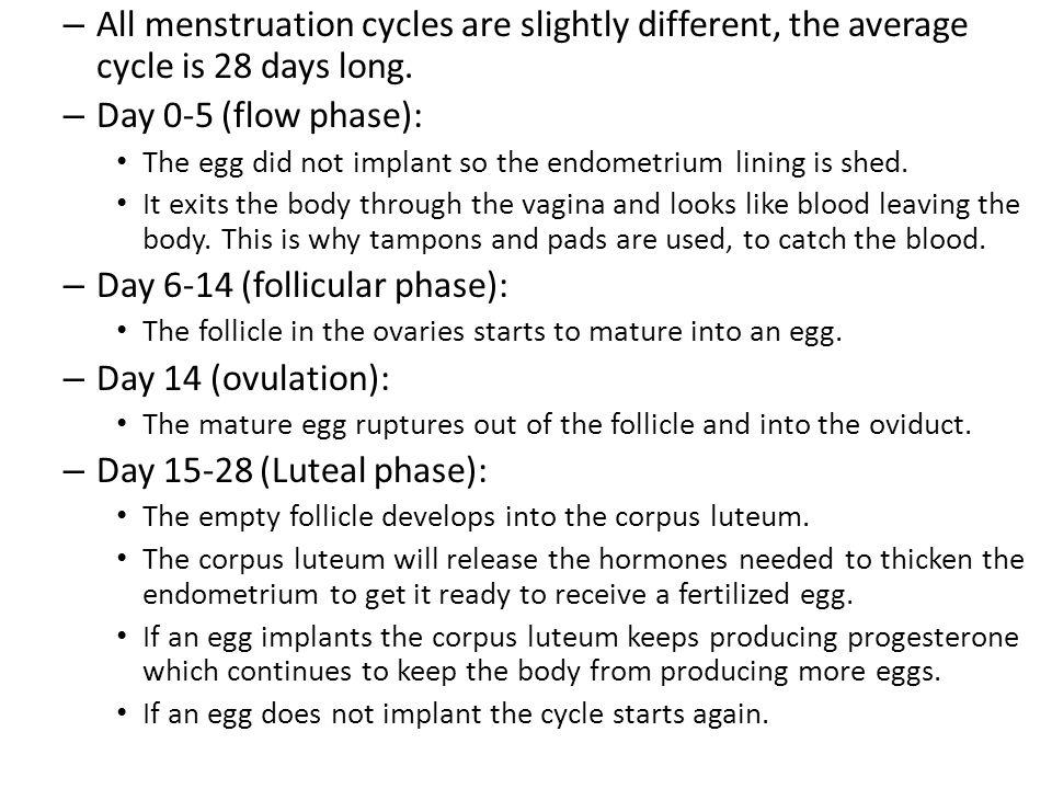 Day 6-14 (follicular phase): Day 14 (ovulation):