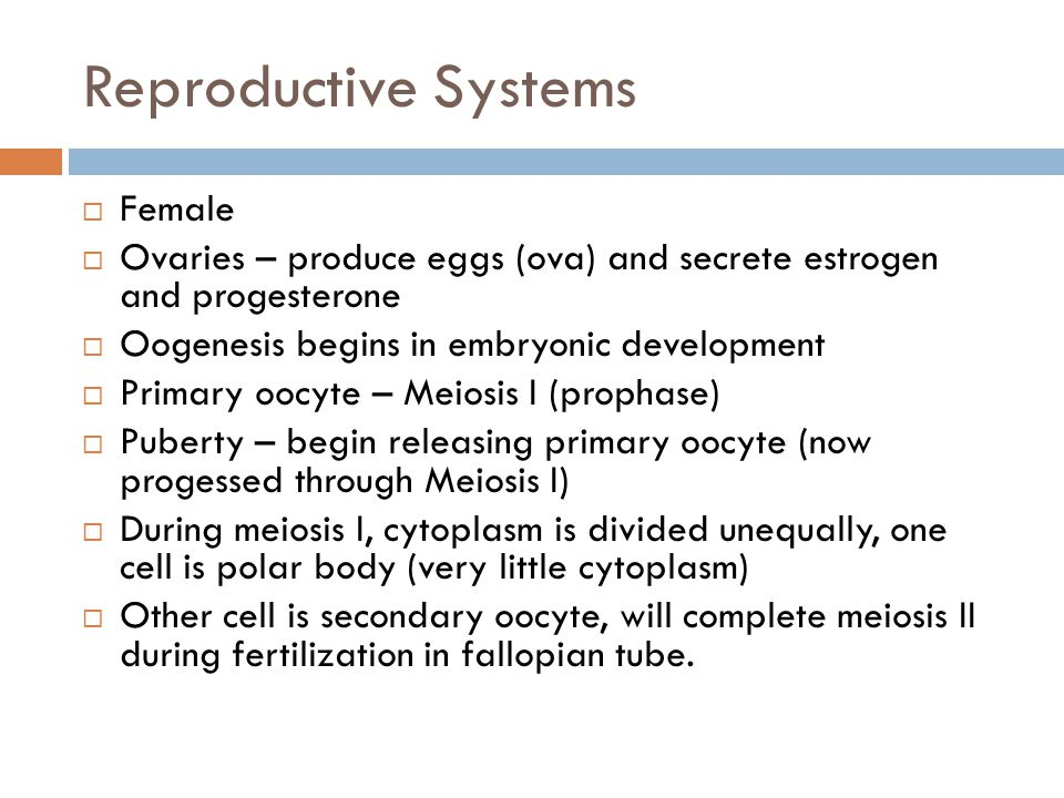 Reproductive Systems Female