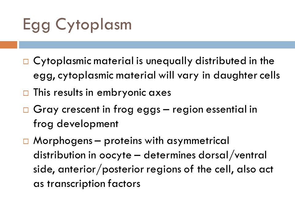 Egg Cytoplasm Cytoplasmic material is unequally distributed in the egg, cytoplasmic material will vary in daughter cells.