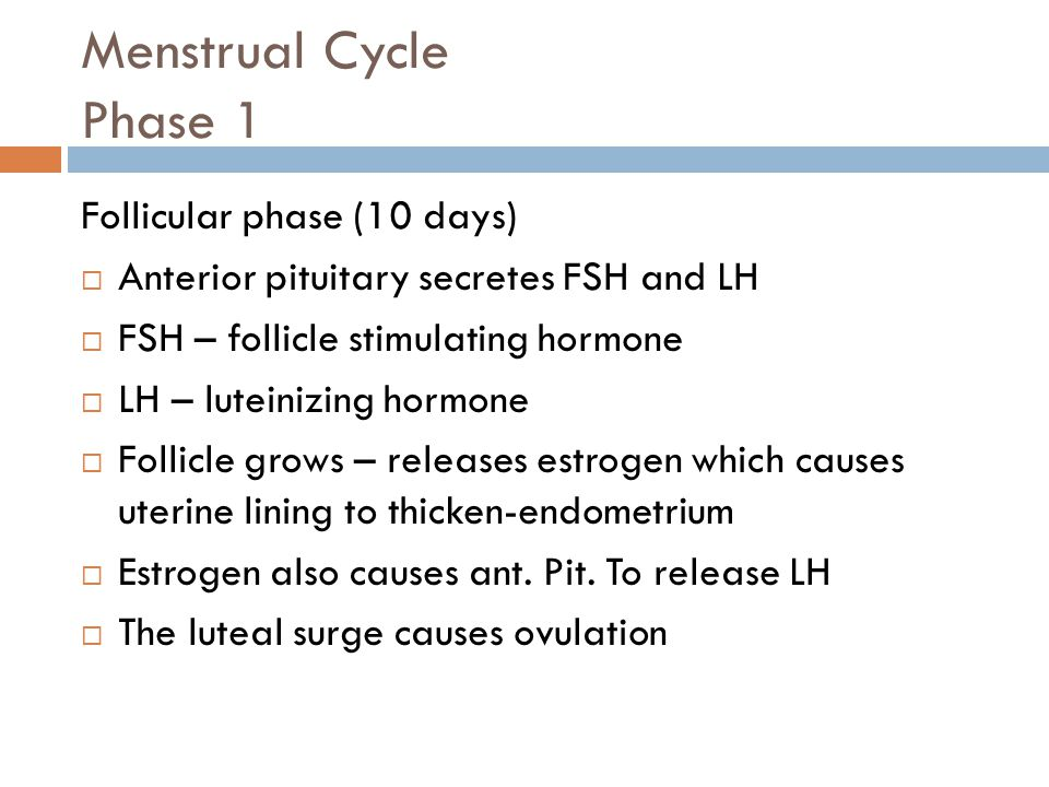 Menstrual Cycle Phase 1 Follicular phase (10 days)