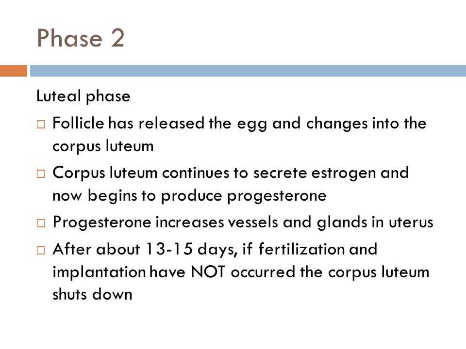 Phase 2 Luteal phase. Follicle has released the egg and changes into the corpus luteum.