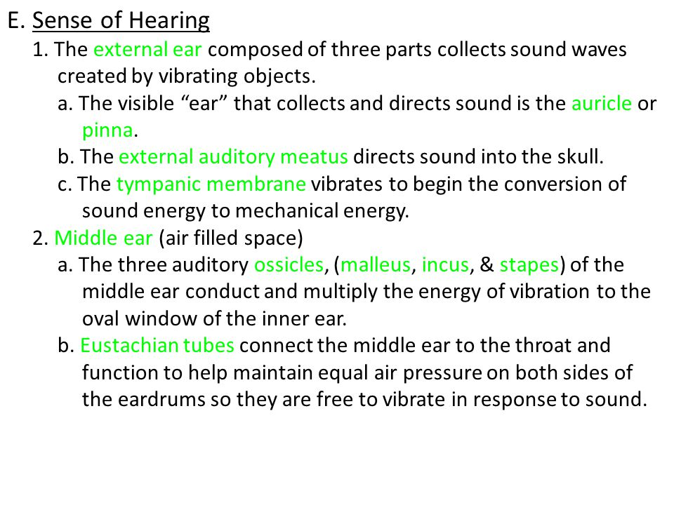 E. Sense of Hearing 1. The external ear composed of three parts collects sound waves. created by vibrating objects.