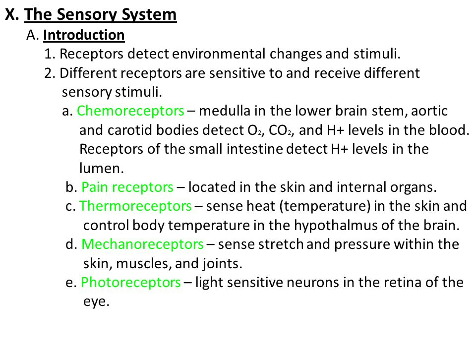 X. The Sensory System A. Introduction