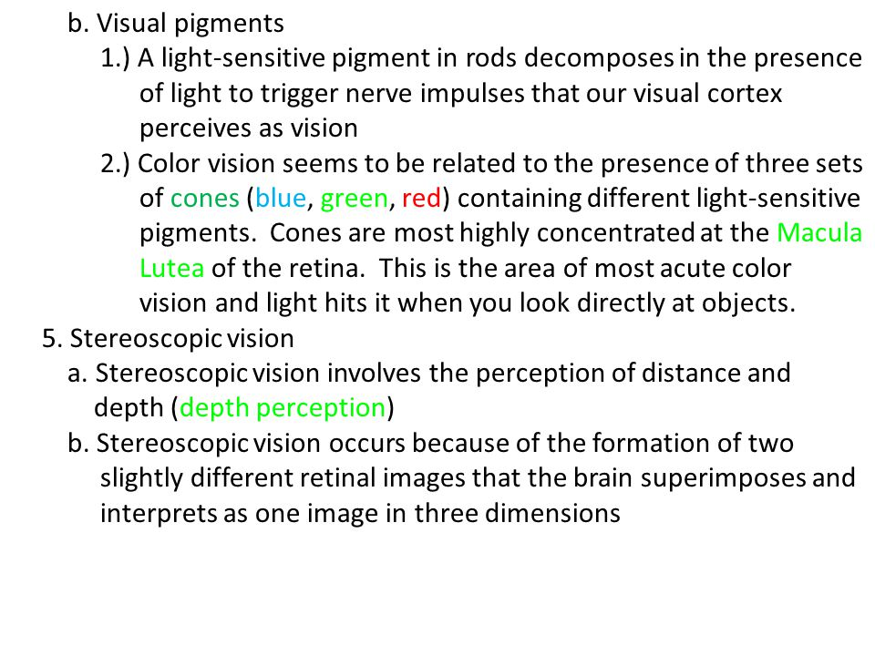 b. Visual pigments 1.) A light-sensitive pigment in rods decomposes in the presence. of light to trigger nerve impulses that our visual cortex.