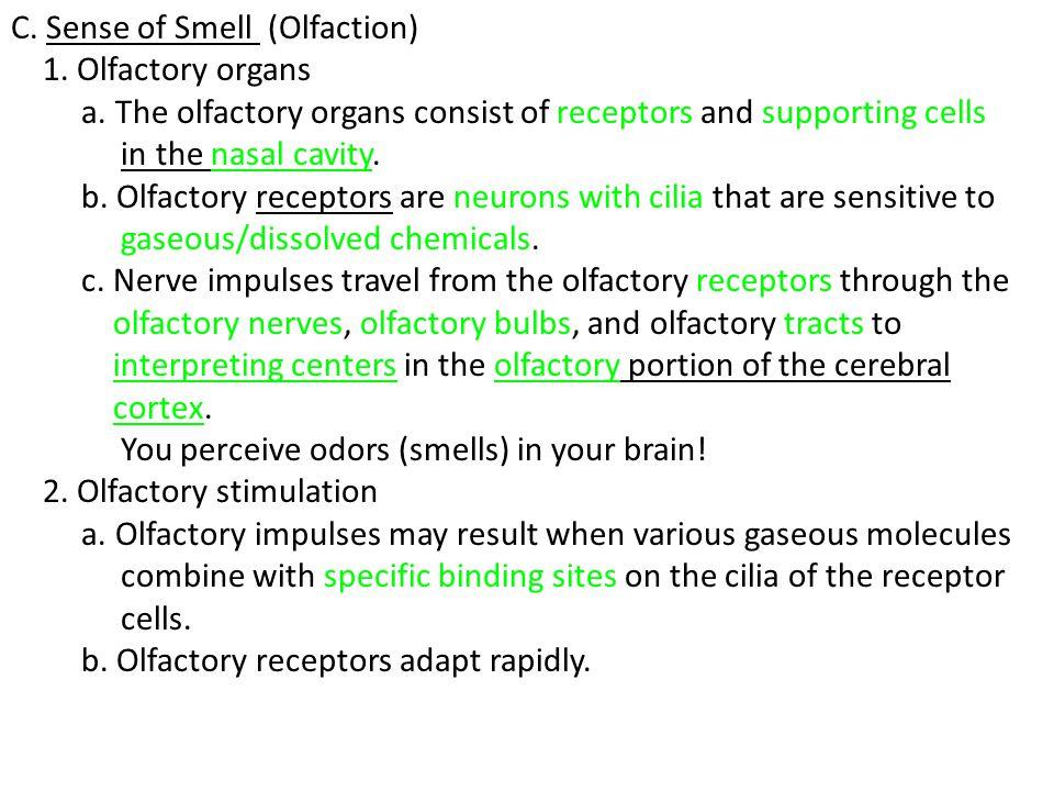 C. Sense of Smell (Olfaction)