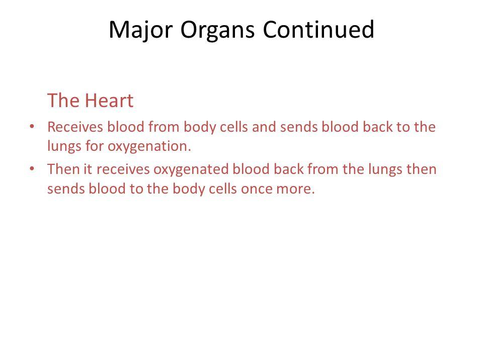 Major Organs Continued