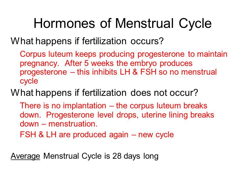 Hormones of Menstrual Cycle