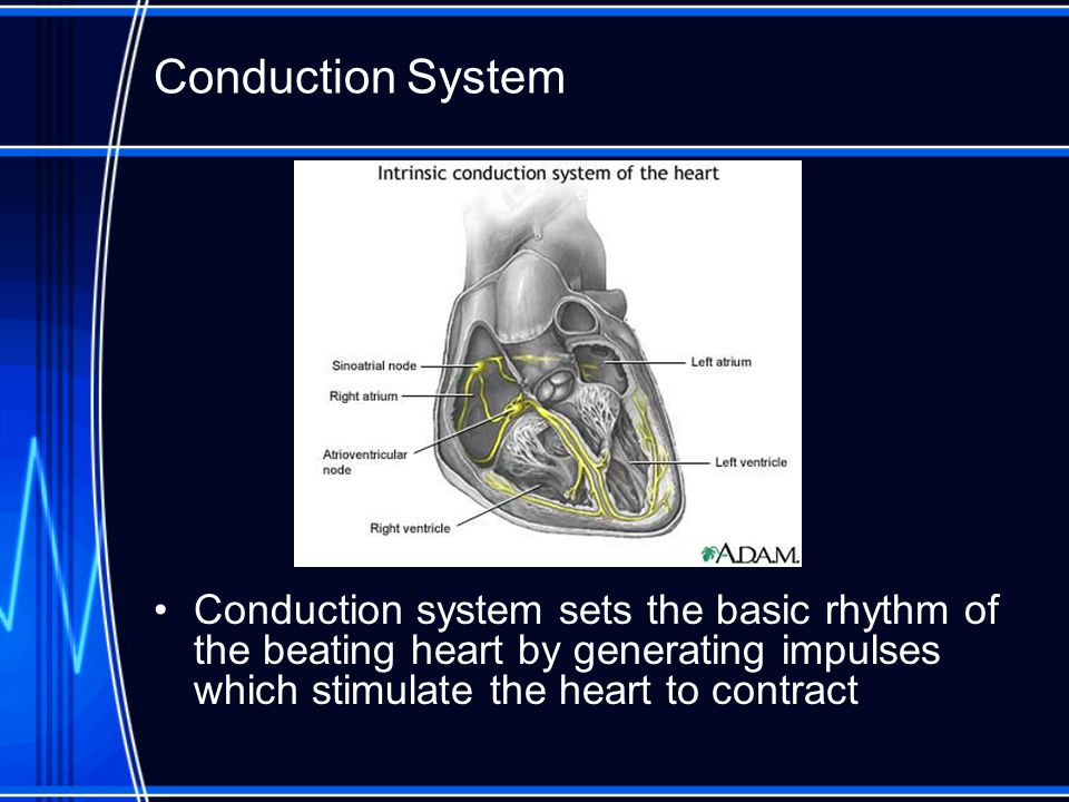 Conduction System Conduction system sets the basic rhythm of the beating heart by generating impulses which stimulate the heart to contract.