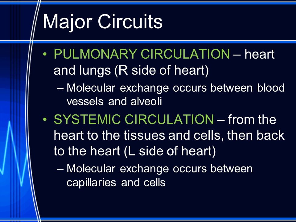 Major Circuits PULMONARY CIRCULATION – heart and lungs (R side of heart) Molecular exchange occurs between blood vessels and alveoli.