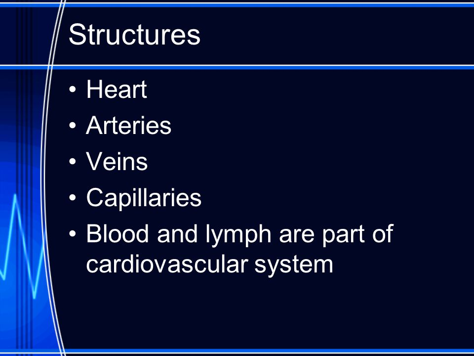 Structures Heart Arteries Veins Capillaries