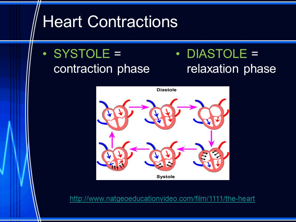 Heart Contractions SYSTOLE = contraction phase