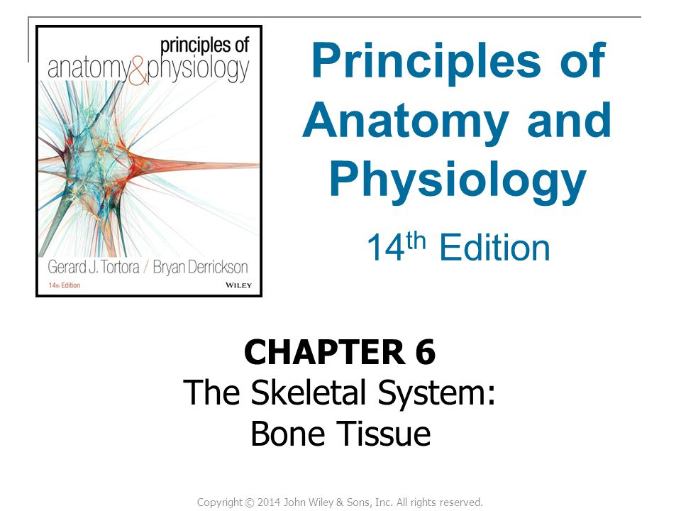 Anatomy and Physiology Visual introduction to each human 5716561 ...