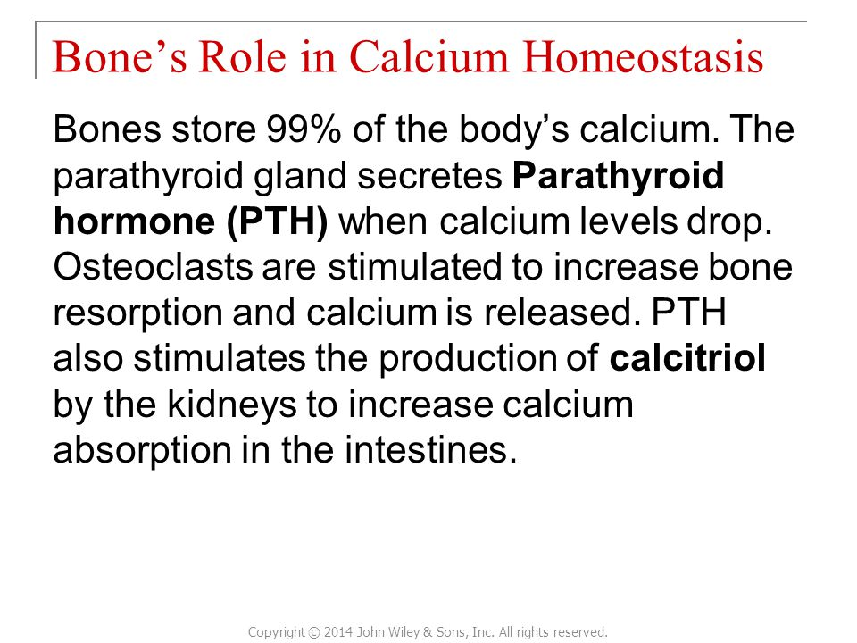 Bone's Role in Calcium Homeostasis