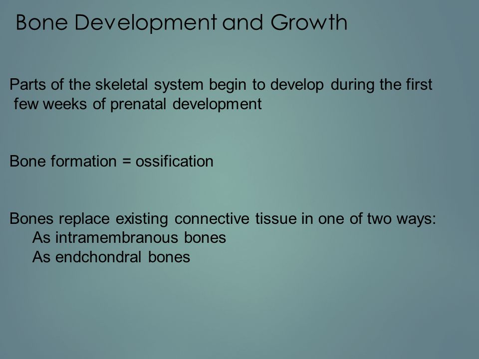 Bone Development and Growth