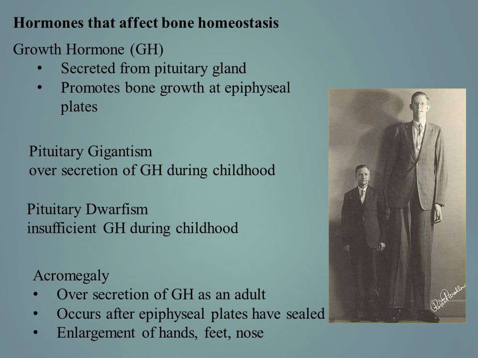 Hormones that affect bone homeostasis