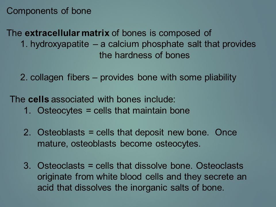 Components of bone The extracellular matrix of bones is composed of. 1. hydroxyapatite – a calcium phosphate salt that provides.