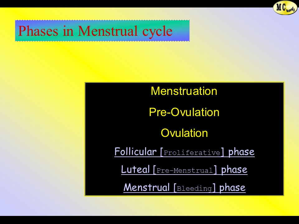 Phases in Menstrual cycle