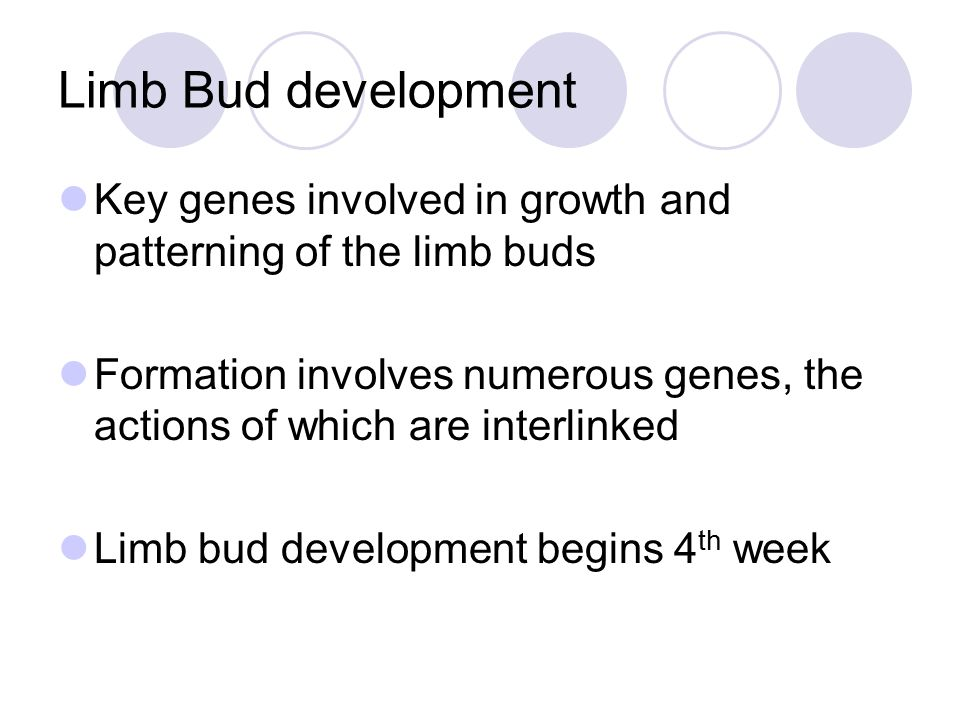 Limb Bud development Key genes involved in growth and patterning of the limb buds.