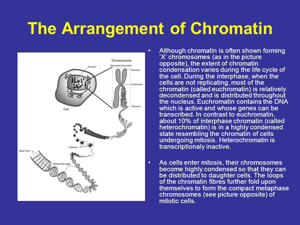The Arrangement of Chromatin