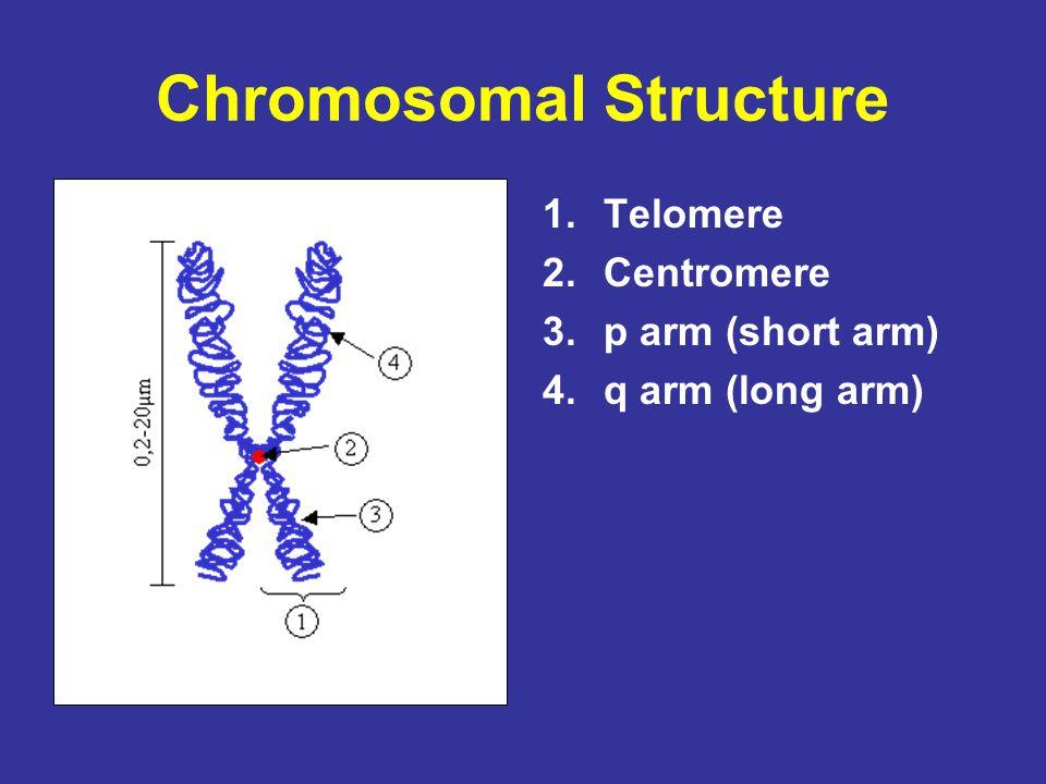 Chromosomal Structure