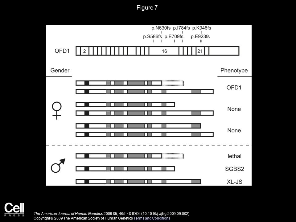 Figure 7 Genotype-Phenotype Correlation of OFD1 Mutations with OFD1, SGBS2, and XL-JS.