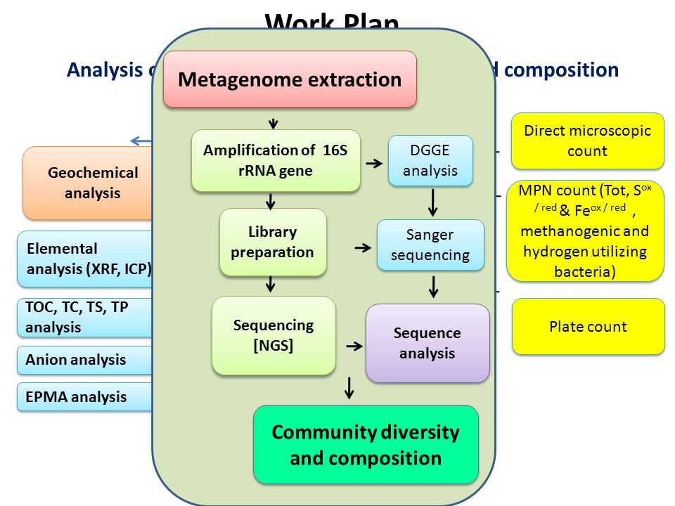 Work Plan Objective 1.: Analysis of microbial abundance, diversity and composition. Metagenome extraction.