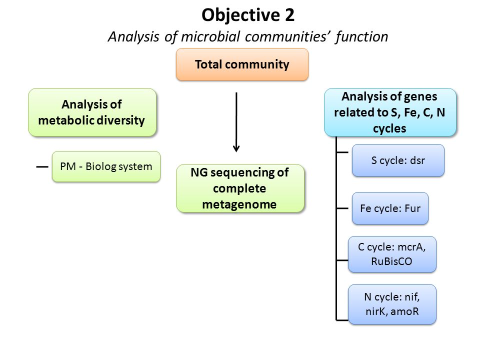 Objective 2 Analysis of microbial communities' function