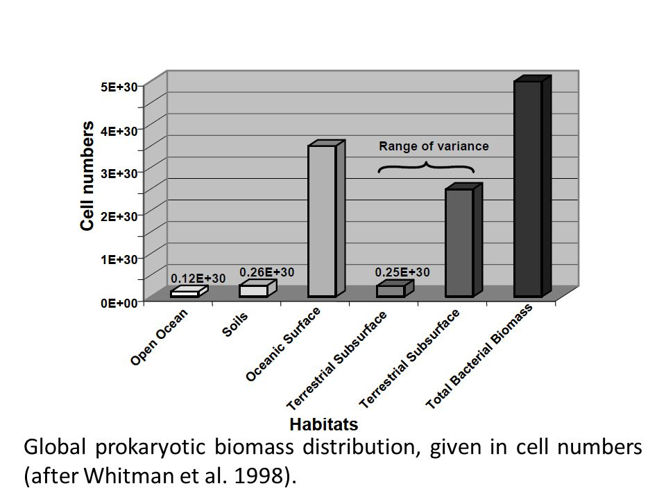 Global prokaryotic biomass distribution, given in cell numbers (after Whitman et al. 1998).
