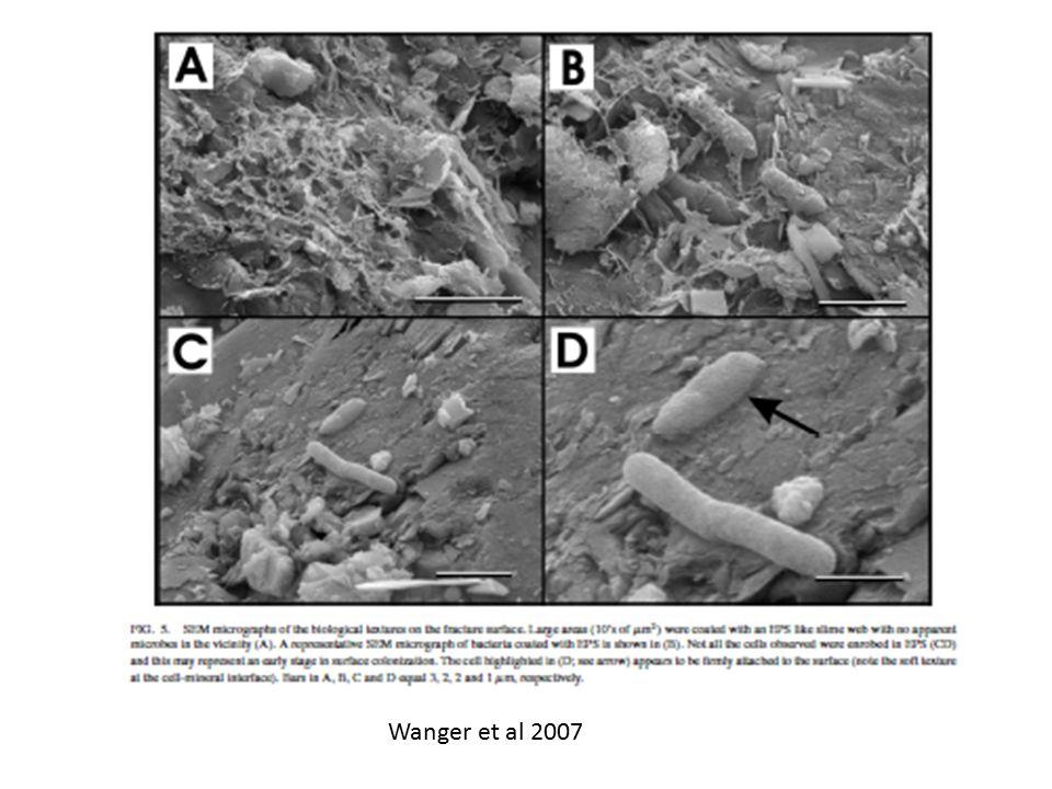 Wanger et al 2007