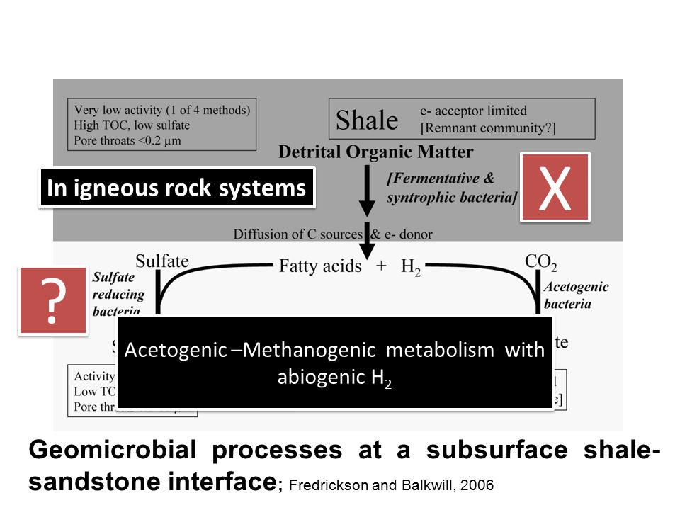 Acetogenic –Methanogenic metabolism with abiogenic H2