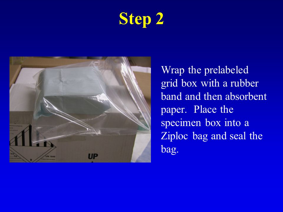 Step 2 Wrap the prelabeled grid box with a rubber band and then absorbent paper.