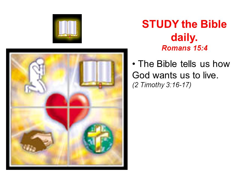 STUDY the Bible daily. • The Bible tells us how God wants us to live.