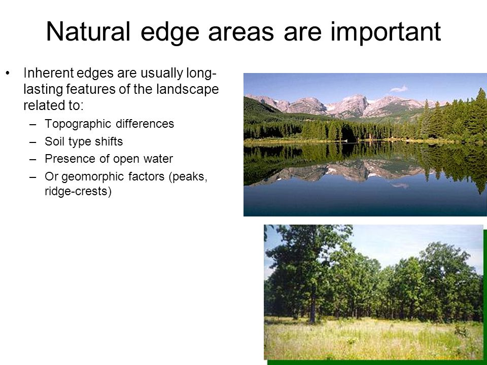 Natural edge areas are important