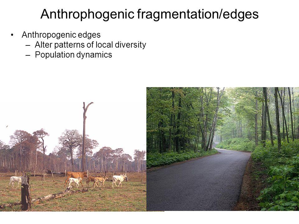 Anthrophogenic fragmentation/edges
