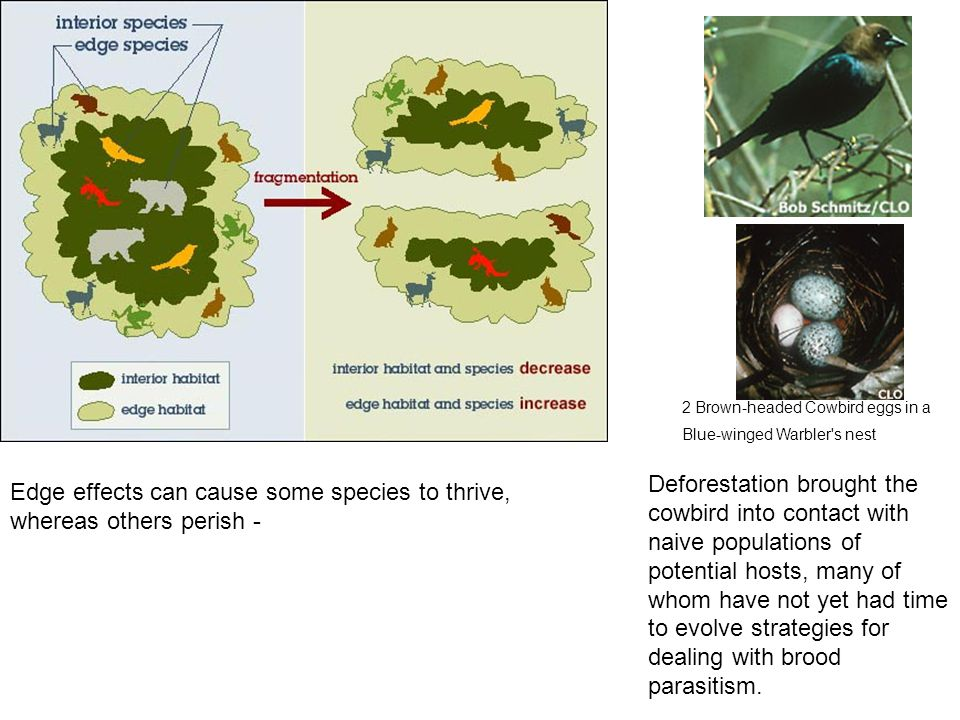 Edge effects can cause some species to thrive, whereas others perish -