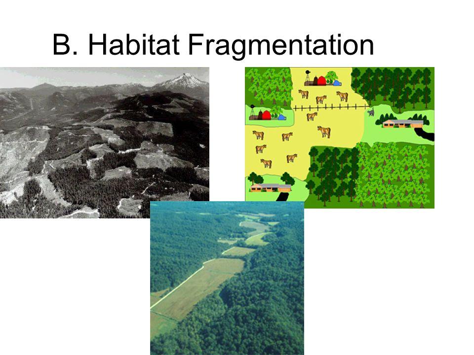 B. Habitat Fragmentation