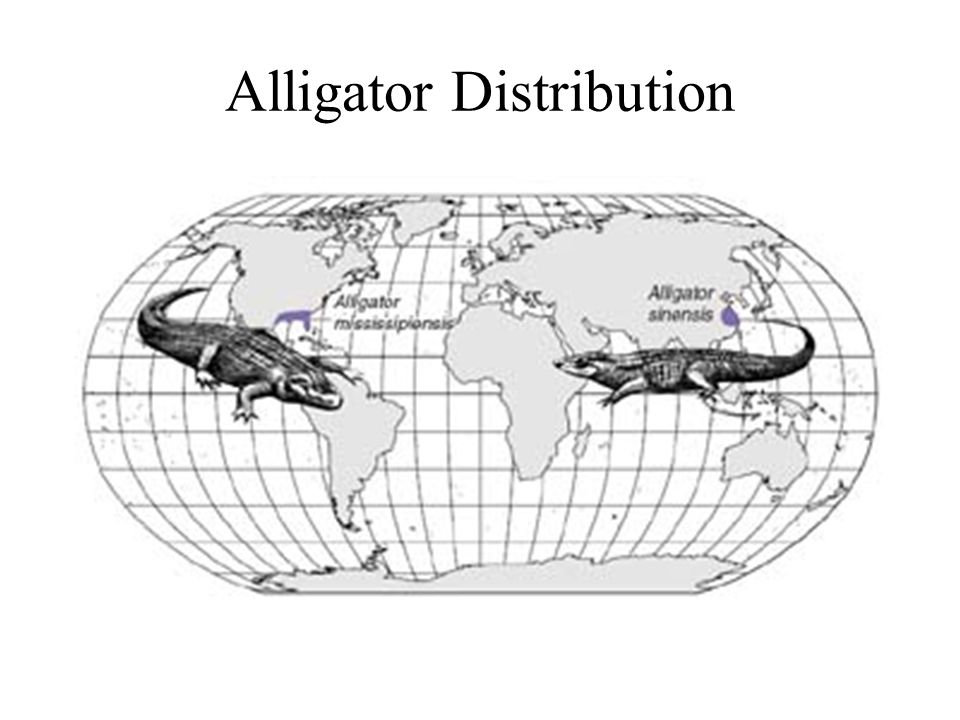 Alligator Distribution