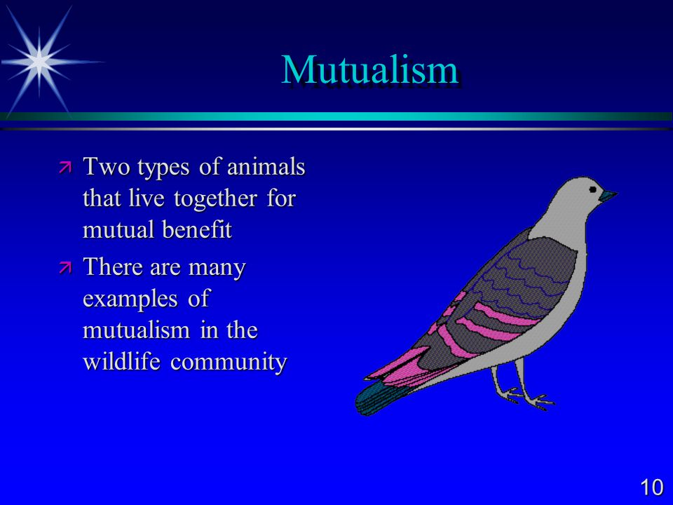 Mutualism Two types of animals that live together for mutual benefit
