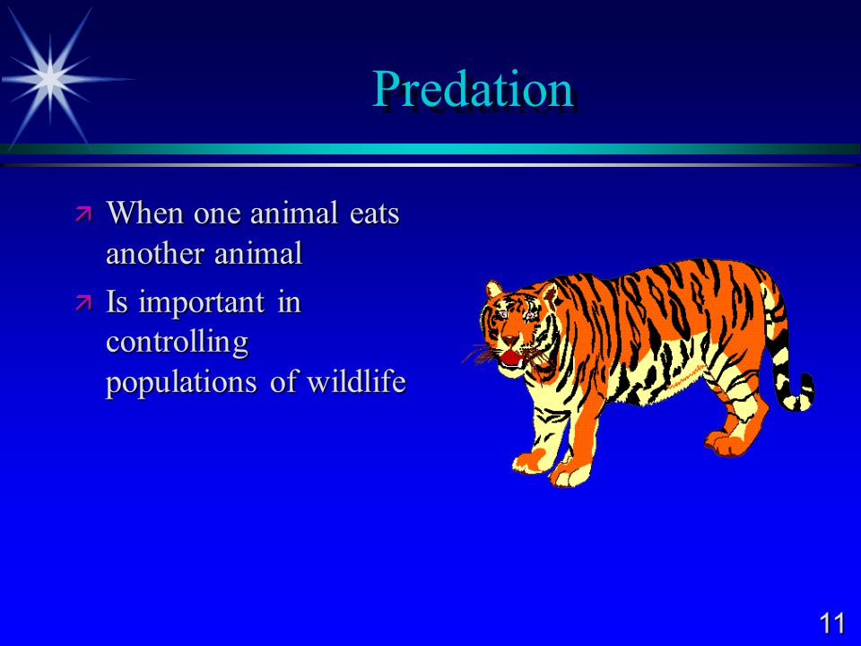 Predation When one animal eats another animal