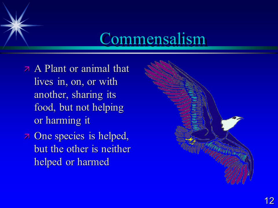Commensalism A Plant or animal that lives in, on, or with another, sharing its food, but not helping or harming it.
