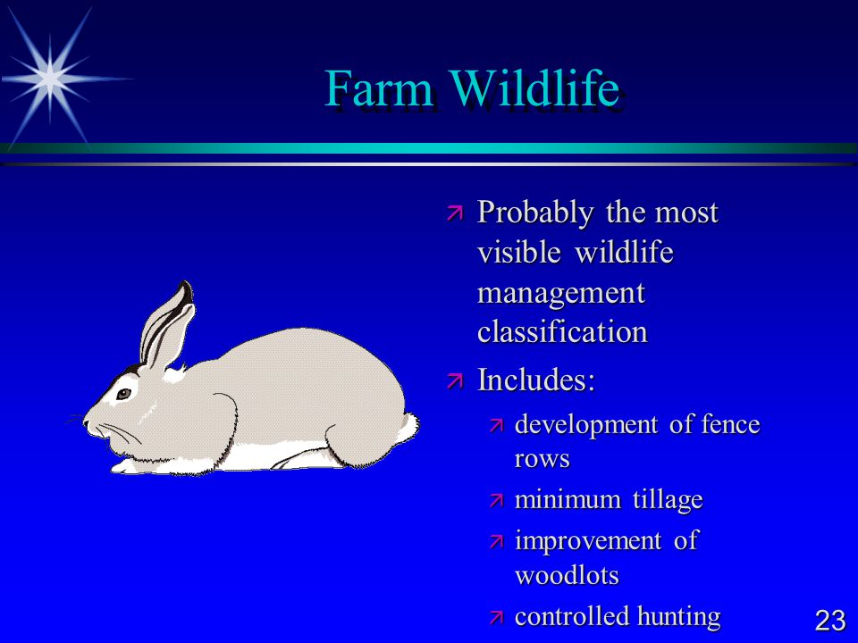 Farm Wildlife Probably the most visible wildlife management classification. Includes: development of fence rows.
