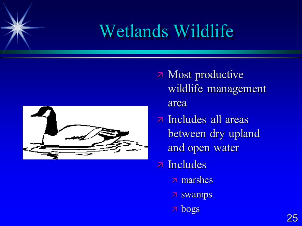 Wetlands Wildlife Most productive wildlife management area