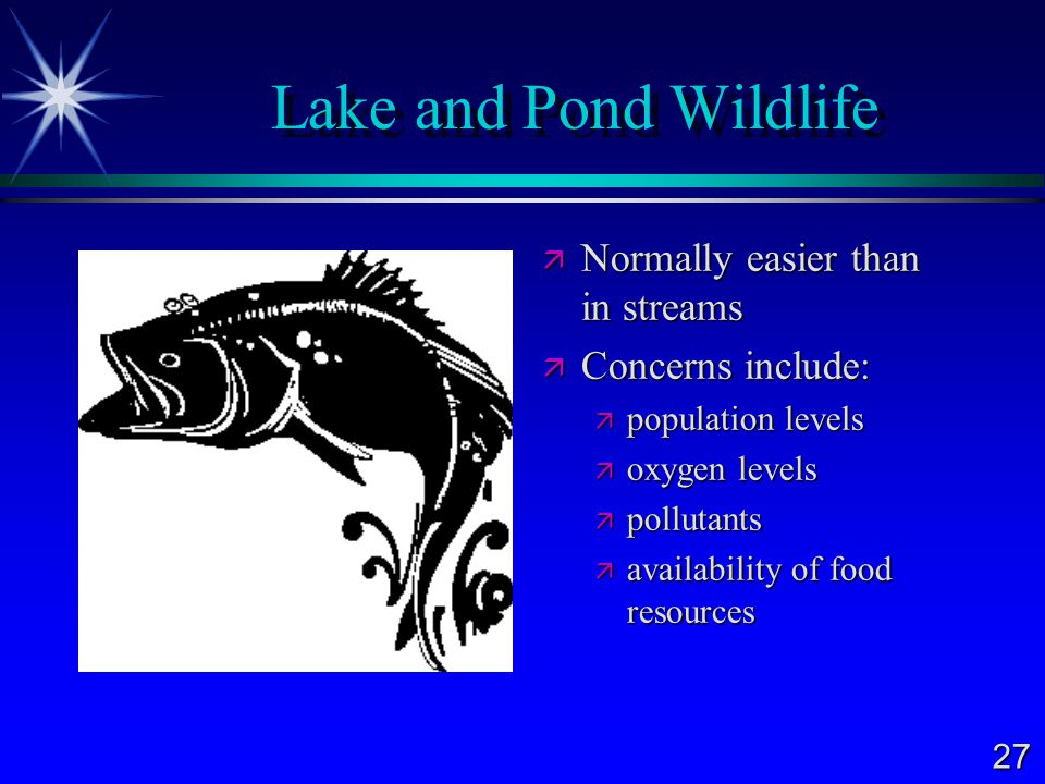 Lake and Pond Wildlife Normally easier than in streams