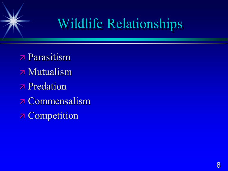 Wildlife Relationships