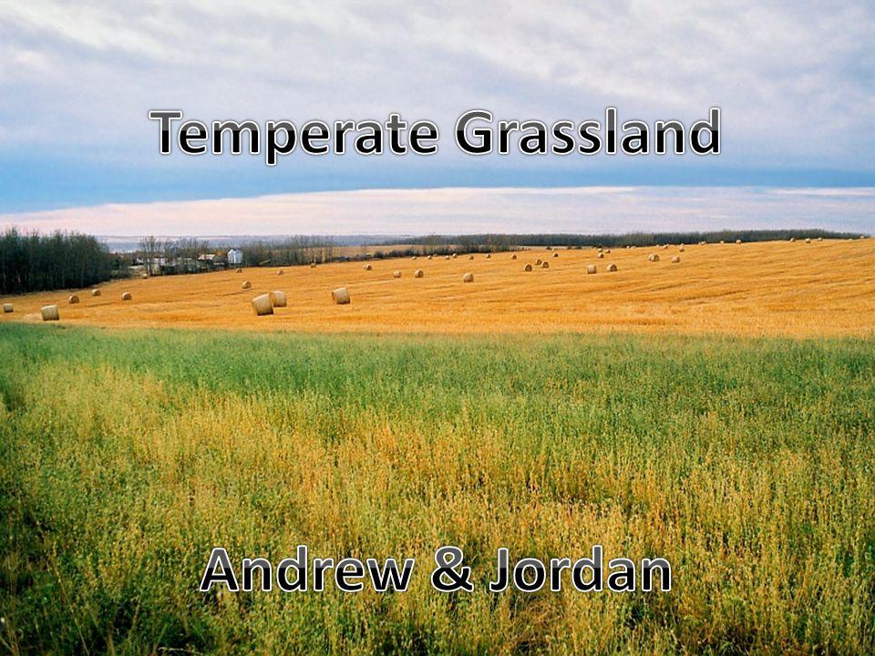 Temperate Grassland Andrew & Jordan