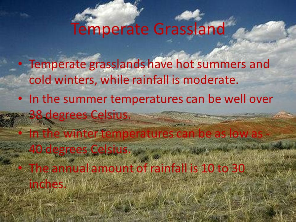 Temperate Grassland Temperate grasslands have hot summers and cold winters, while rainfall is moderate.