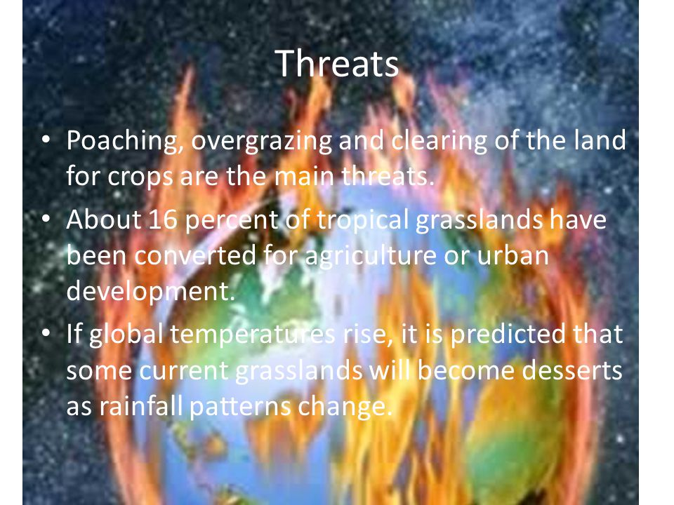 Threats Poaching, overgrazing and clearing of the land for crops are the main threats.