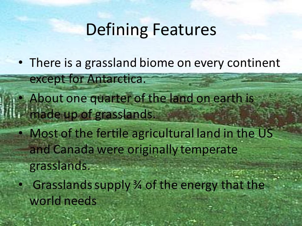 Defining Features There is a grassland biome on every continent except for Antarctica.