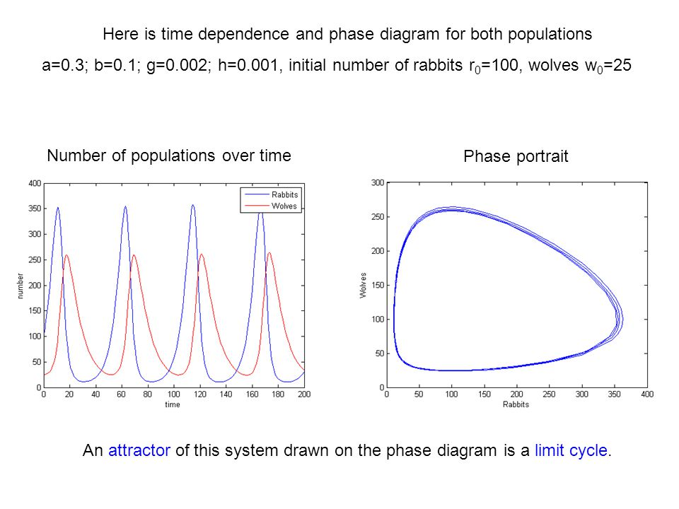 Here is time dependence and phase diagram for both populations